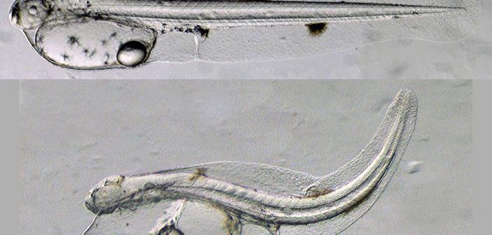 03.25.14_larvae