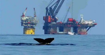 A whale fluke is visible in the foreground of Gulf of Mexico production platforms. BOEM photo by Nicolette Nye.