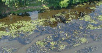 Oiled vegetation in the Kalamazoo River following an Enbridge Pipeline spill in 2010. EPA photo.