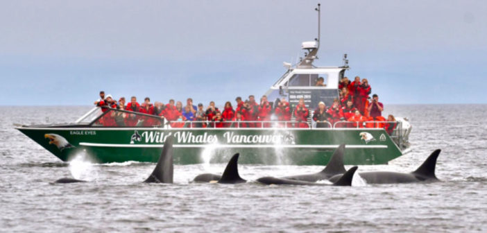Foil assist catamarans Eagle Eyes, whale watcher