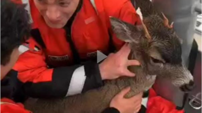 Coast Guard assists distressed deer swimming in Alaska's Clarence Strait